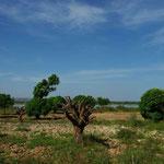 Vers le fleuve : broussailles et manguiers