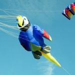 Der Papagei fliegt schon.