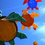Das Turtle - Meeting, ein Genuss für Freunde der Inflatables