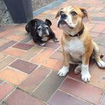 C & More mit ihrer 12 Jahre alten Französisch Bulldog Kumpeline