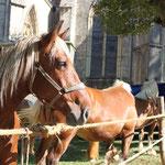 7 août 2012 - Foire de Coligny