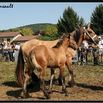 Concours régional de chevaux de trait