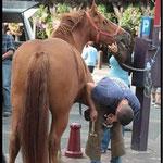 Championnat de France du cheval Pinto