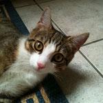 Katze - Urlaubsbetreuung vor Ort