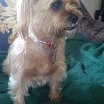 Hund - kurze Zeit unser Gast