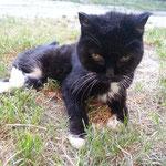 Micki, Halterin verstorben, Dauerpflegestelle bis auch sie verstarb (16 J)