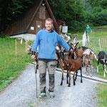 Kurt Zwicky junior begleitet die Ziegen zum Verlad auf den Viehtransporter  (Bilder hasp)