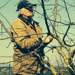 Manfred Riedl, der Baumexperte bei der Arbeit