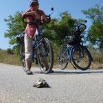 voyager à vélo, c'est aussi savoir s'arrêter pour regarder encore plus lent que soi