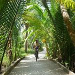 Promenade dans les îles du delta