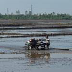 labour des rizières
