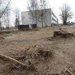 Baurecht geht vor Baumschutz