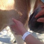 """vielfach """"zeigen"""" mir die Pferde, wo auch noch ein Punkt ist, der beachtet werden soll..."""