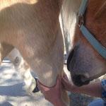 """auch hier: das Pferd """"stimmt"""" zu"""