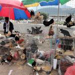 Hühner, Hähne und Tauben auf dem Tiermarkt.