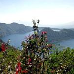 Blumen an der Laguna de Cuicocha.