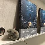 Pips entdeckt weitere Mäuse