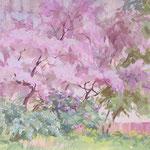 Blühende Bäume,  21 x 31 cm, Gouache      - 200 Euro