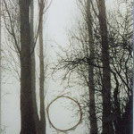ring of reed, lake of Constance 1997