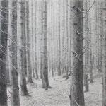 Im Schwarzwald, 70 x 100 cm, Kohlstift auf Papier, 2015