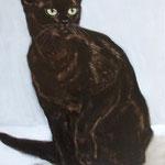 Katze,cat , 40 x 30 cm 2013 , Oel auf Leinwand