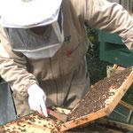 Bienenkontrolle