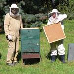 Bienenkasten Kontrolle