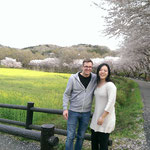 Kirschblüten und Raps