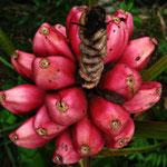 Fotos C. Duncan - Reserva Biológica Caoba