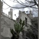 Vida brota entre las ruinas