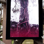 Sanguisorba (Fotografía transferida a lienzo con marco de terciopelo negro y planta seca pegada)