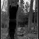 Soy bosque