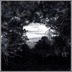 Un claro en el bosque