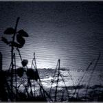 Murmullos de la profundidad pantanosa