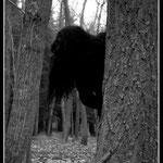 Hija del bosque