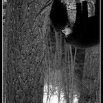Hija del bosque (II)