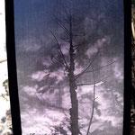 Árbol solo (Fotografía transferida a madera y pintada con pintura acrílica. Marco en terciopelo negro)