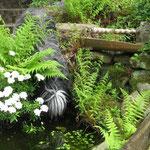 Kleine Erfrischung im Naturgarten