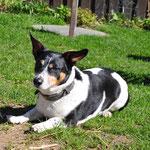 Unser Hofhund Tony