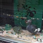fenster hauptstrasse, jade