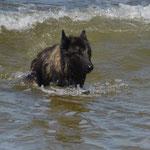Canis und die Wellen