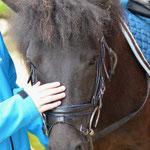 Ponys streicheln und aufsatteln...