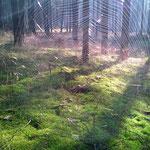 Filigrane Netze im Gegenlicht