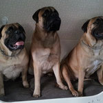 nest Brave; Uma, Denzel en Ruby