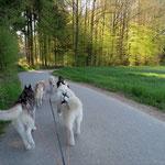 Wir laufen durch den herrlichen Frühlingswald