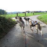 Swing-Dogs sind  Merkur und Ice