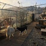 Die Husky`s begrüssen diesen herrlichen Wintermorgen ganz still, beinahe feierlich.