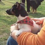 Klein Abby als Therapiehund