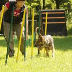 Slalom, für einen Schutzhund garnicht einfach