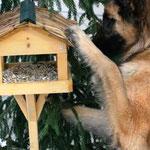 Wieso Vogelfutter??? Eliss (Foto P. Bauer )